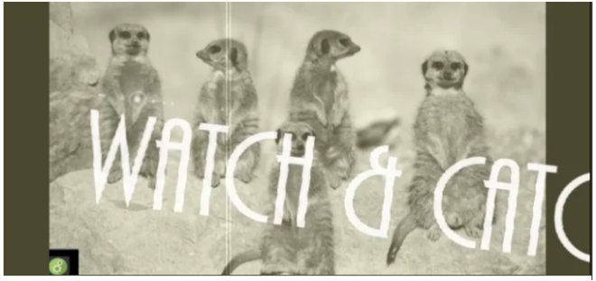 WATCH CATCH
